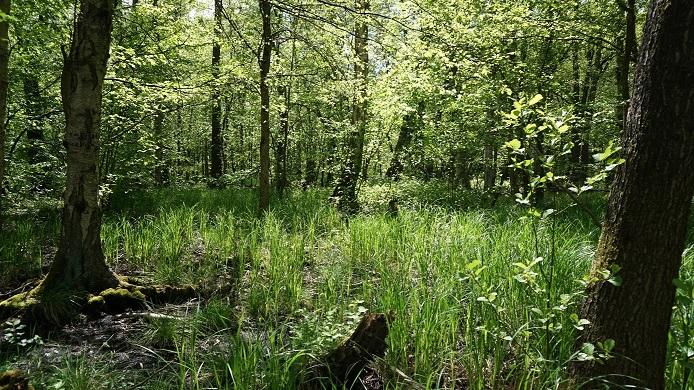 Frühlingsdokumentationen der Naturwerkstatt